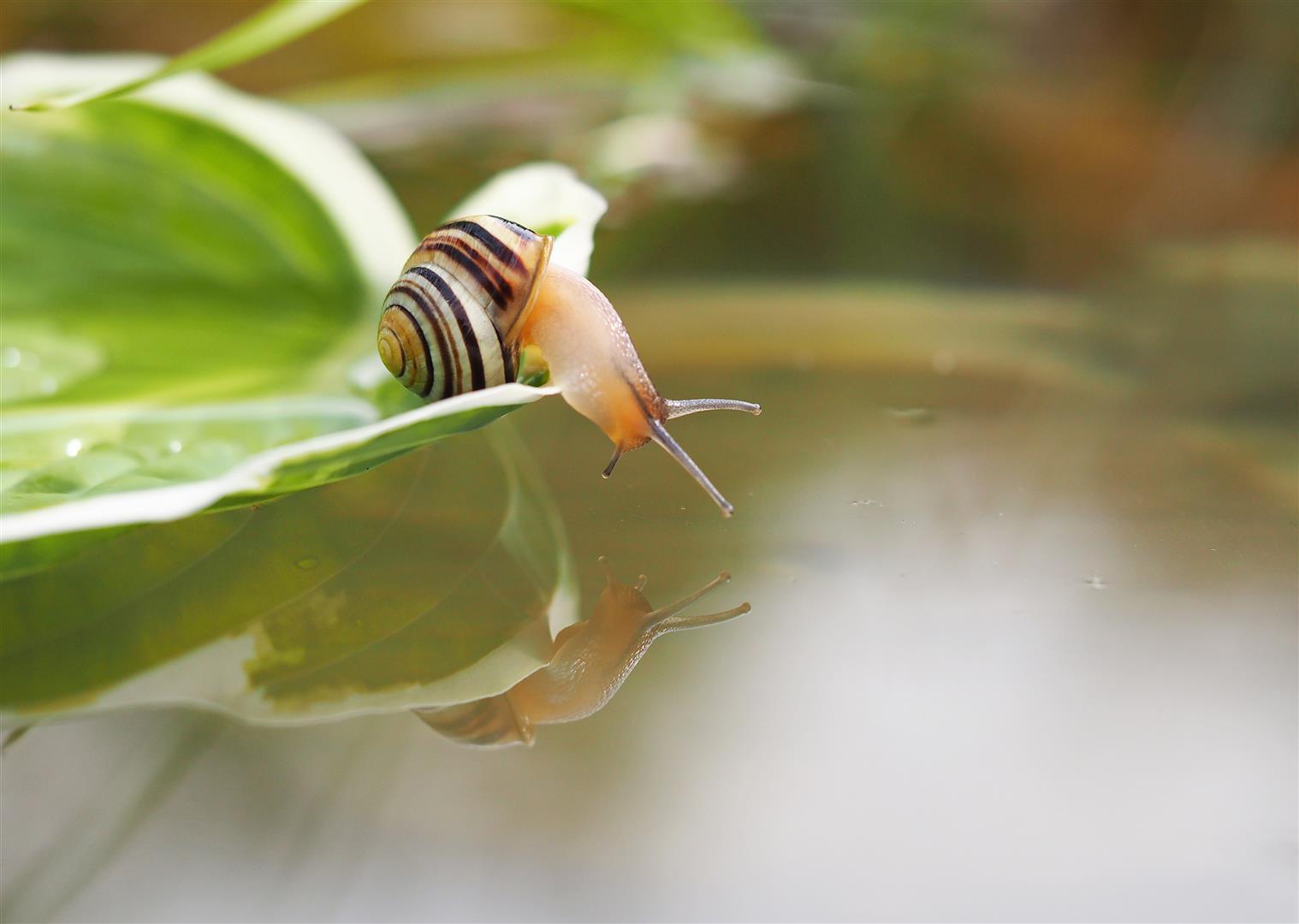Snail at Ballycanew