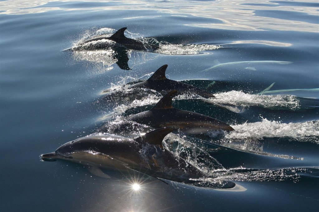John Burke won the coveted prize with his photograph of 'Dolphins', which was taken off the coast of Youghal.