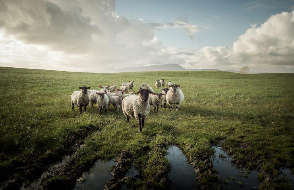 Photo David Ahern